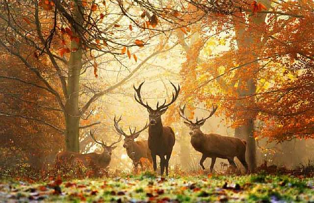 Realm of the Deer - Richmond Park, London.