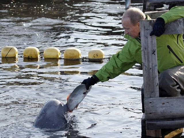 he-also-has-found-ways-to-help-scientists-tag-creatures-without-shooting-them-here-he-feeds-a-beluga-whale-name-dasha