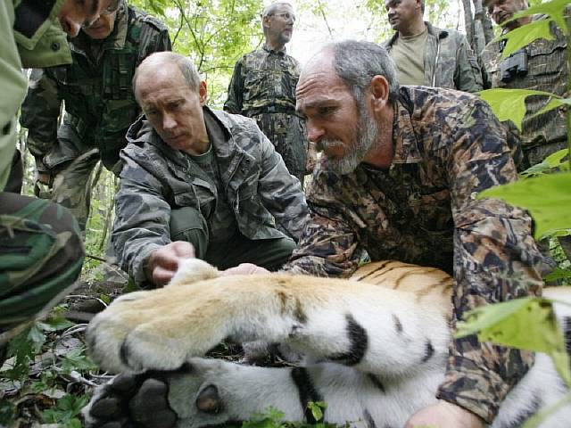he-shot-a-tiger-with-a-tranquilizer-dart-which-allowed-the-researchers-to-tag-the-big-cat-with-a-satellite-tracker