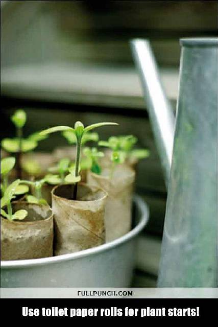 11-Use-toilet-paper-rolls-for-plant-starts