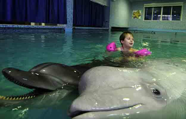 "A boy swims with dolphins in a ""Sea Star"