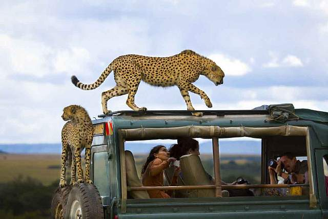 third-place-winner-say-cheese-location-masai-mara-national-park-kenya
