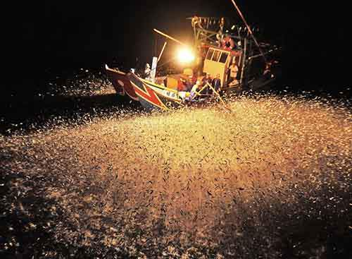 Chinese fishermen using fire to attract fish at night