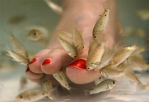 http://mixstuff.ru/wp-content/uploads/2013/09/fish-pedicure.jpg