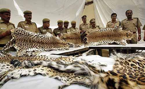 forest-officials-are-authorized-to-shoot-and-kill-poachers