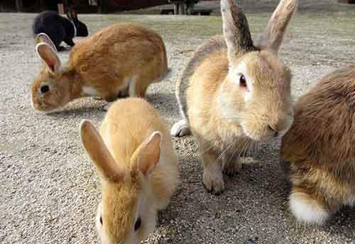 1-okunoshima-rabbit-island-in-japan