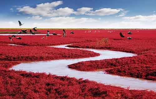 Beautiful red banks along river in China
