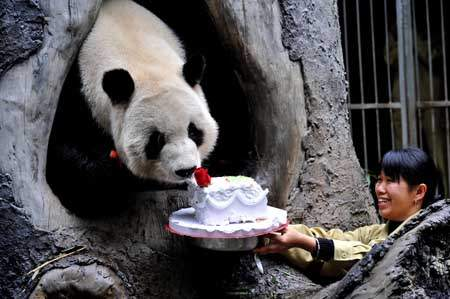 http://mixstuff.ru/wp-content/uploads/2013/10/china_happy_new_year_giant_panda_02.jpg