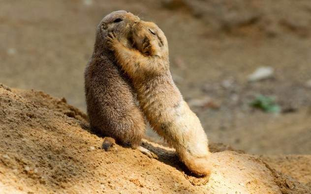 prairie-dog-kiss-e1380734434703