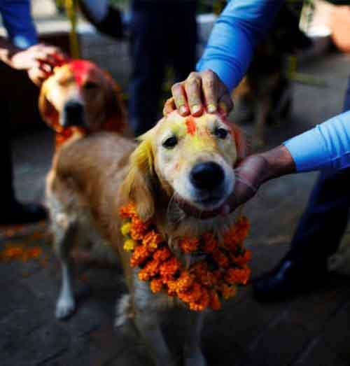 a98774_dog ceremony