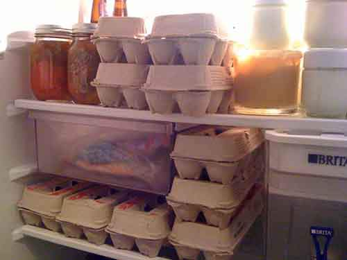 eggs-in-fridge