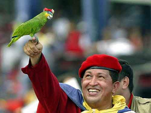 parrots-get-their-own-revolutionary-berets