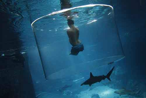 Vujicic, an Australian motivational speaker who was born without limbs, swims with sharks at the Marine Life Park in Singapore