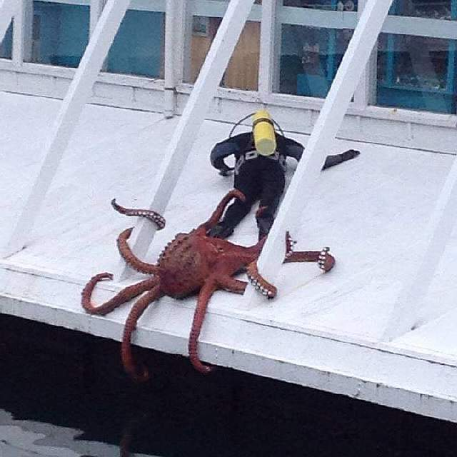 Sir, do you have a moment to talk about our lord and savior, Cthulu
