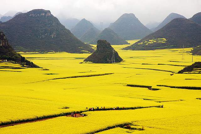 The Flower Ocean, Louping, China.