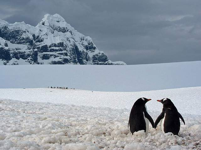 penguin-pair-point-lockroy_72970_990x742