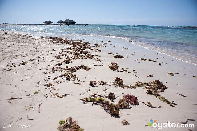 reality-that-beach-is-covered-in-seaweed