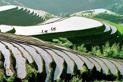 terraced-paddy-fields-wind-up-from-a-riverside-in-china-these-man-made-structures-allow-communities-to-harvest-rice-in-mountainous-areas