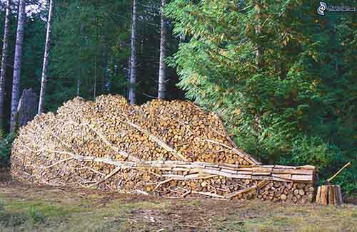 stacked wood, tree, coniferous forest 156484