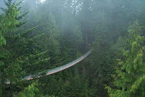 Capilano-Suspension-Bridge-Park-2