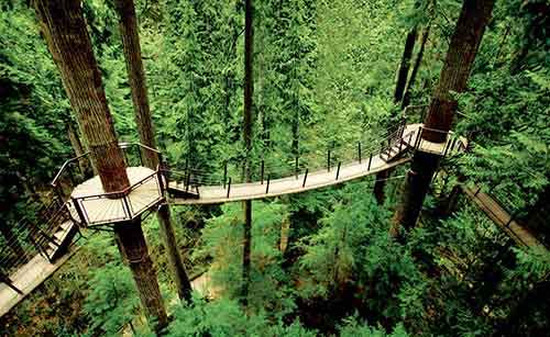 Capilano-Suspension-Bridge-Park-4