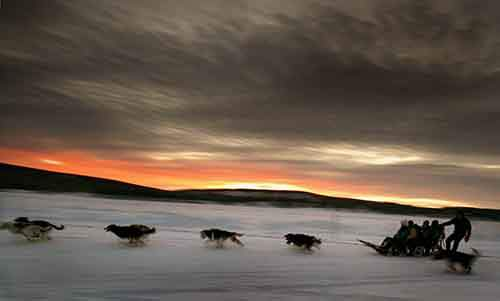 a-dogsled-team-carries-tourists-down-the-frozen-torne-river-located-above-the-arctic-circle-in-northern-sweden
