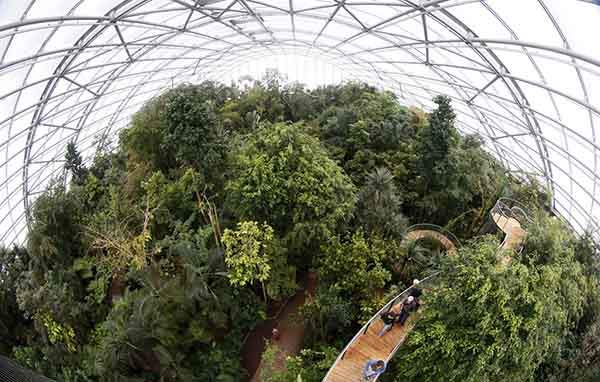 visitors-climb-up-stairs-on-the-newly-opened-treetop-path-in-the-masoala-rainforest-hall-at-the-zoo-in-zurich