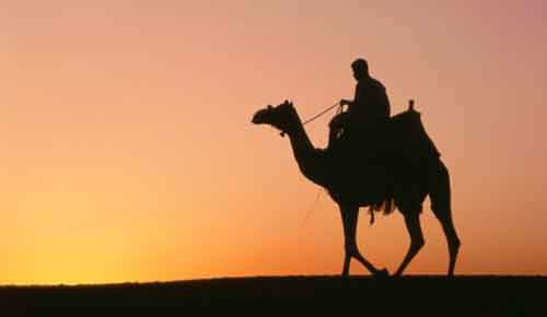 6-camel_sunset