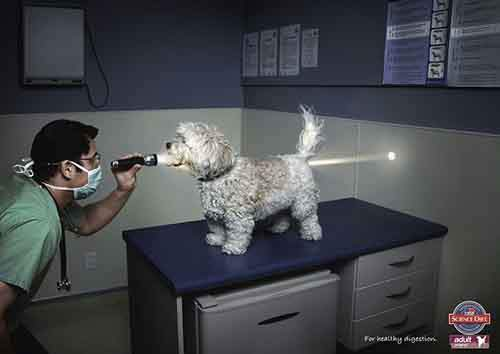 Funny-ads-with-animals-1