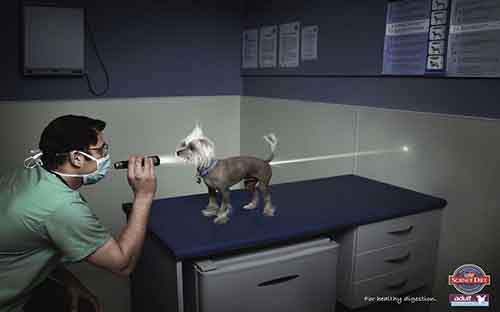 funny-ads-with-animals-2