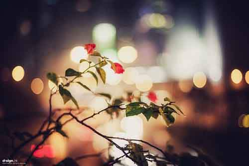 Bokeh-Photography-Examples-and-Tips16