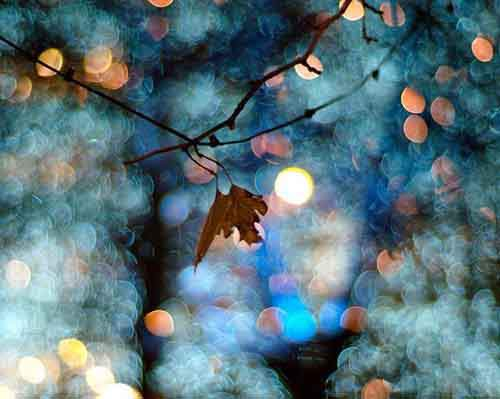 Bokeh-Photography-Examples-and-Tips28