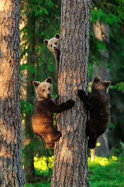 bear-photography-25