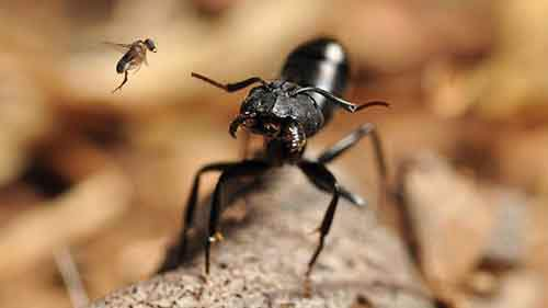 1-l-and-physiological-ecology-section-believe-it-or-not-this-ant-is-being-attacked-by-the-tiny-parasitic-fly-and-not-the-other-way-around