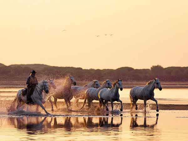 ride-a-white-horse-with-a-french-cowboy-called-a-gardian-in-the-camargue-europes-largest-river-delta