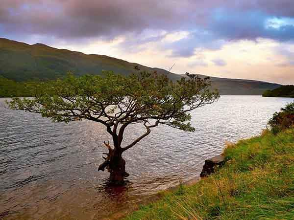 sometimes-trees-grow-right-on-the-water-of-loch-lomond-in-southwestern-scotland