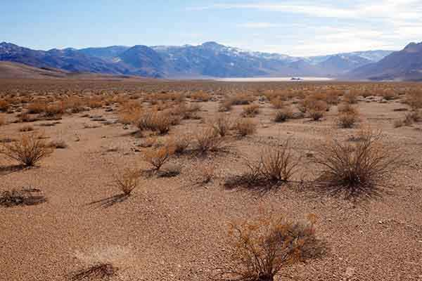 the-landscape-ecology-and-ecosystems-winner-is-this-image-of-the-sparse-plants-that-survive-in-death-valley-by-benjamin-blonder