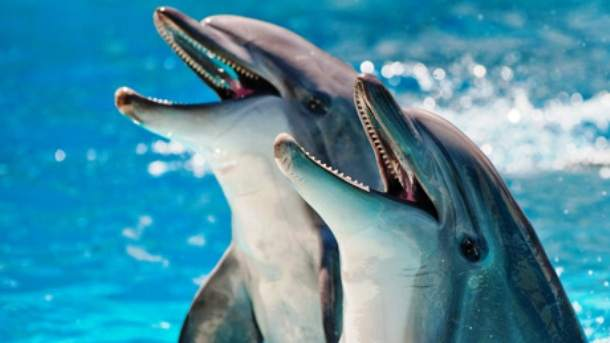 www.pbs_.org-how-smart-dolphins-vi