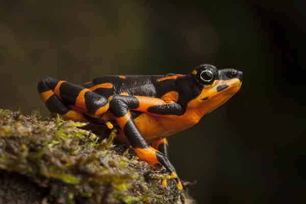 In-Search-of-Lost-Frogs1__880