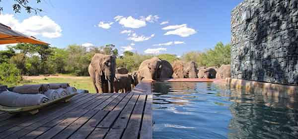 Phinda-Homestead-elephants