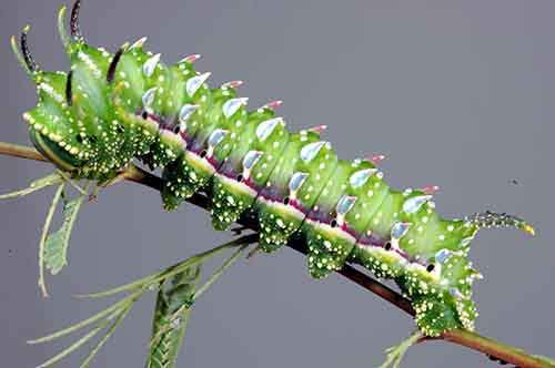 caterpillar-moth-butterfly-before-after-metamorphosis-13-1