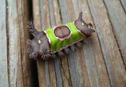 caterpillar-moth-butterfly-before-after-metamorphosis-3-1