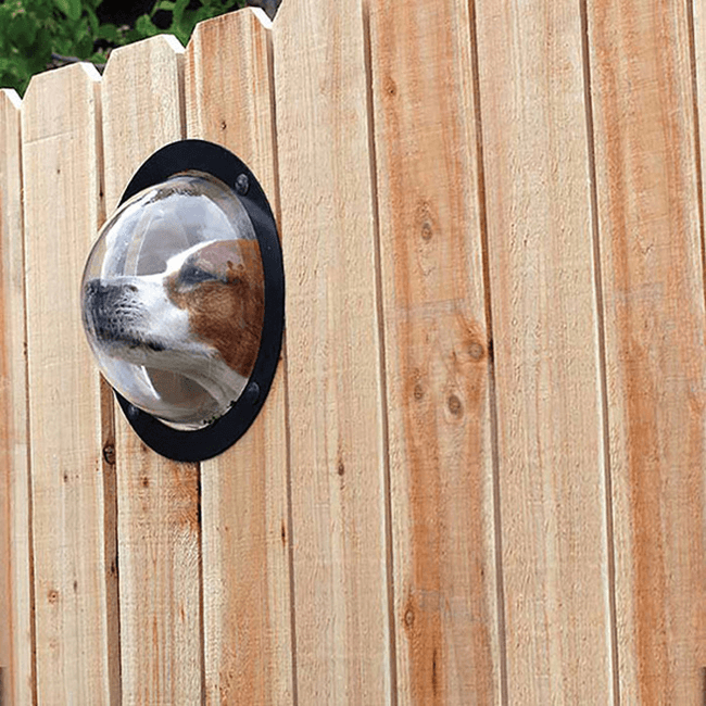 dog_peek_window