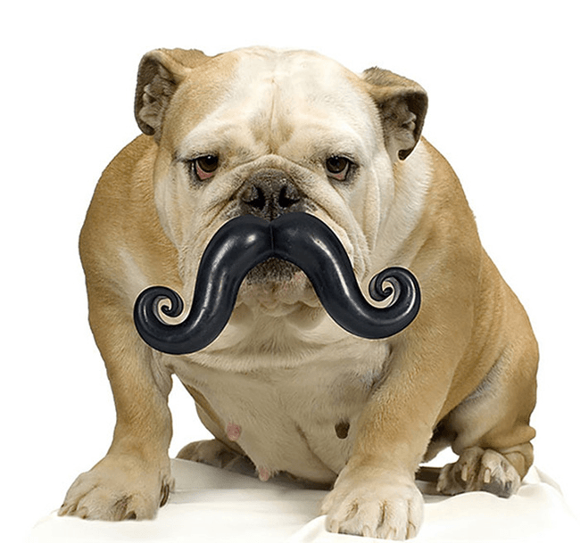 doggy_moustache