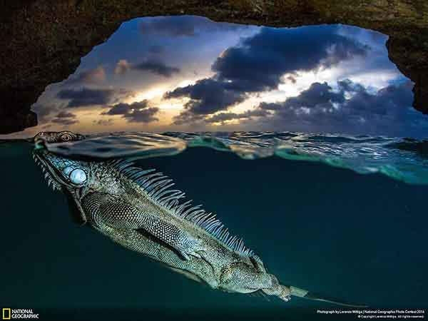 national-geographic-photo-contest-2014-photography-16