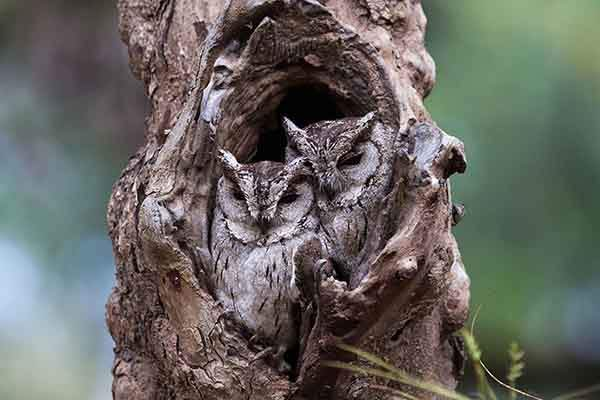 owl-camouflage-disguise-25