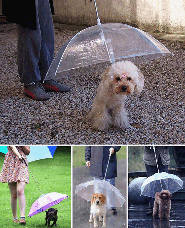 pet-umbrella