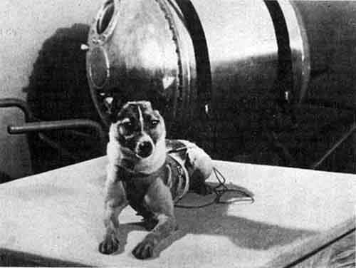 a-dog-was-the-first-living-mammal-to-orbit-the-earth-photo-u1