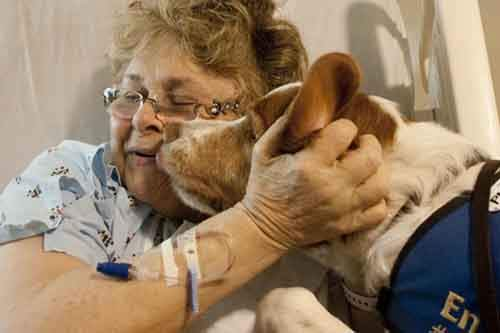 dogs-can-detect-cancer-and-other-diseases-photo-u1