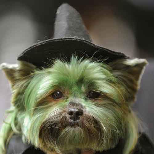 dogs-were-accused-of-witchcraft-photo-u1
